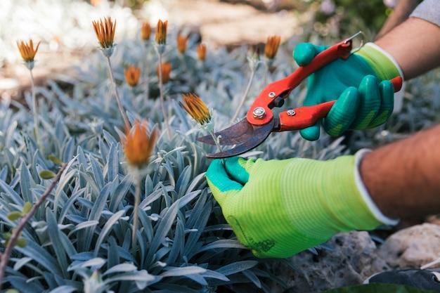 Close-up van de hand die van een mannelijke tuinman de bloemen snoeien