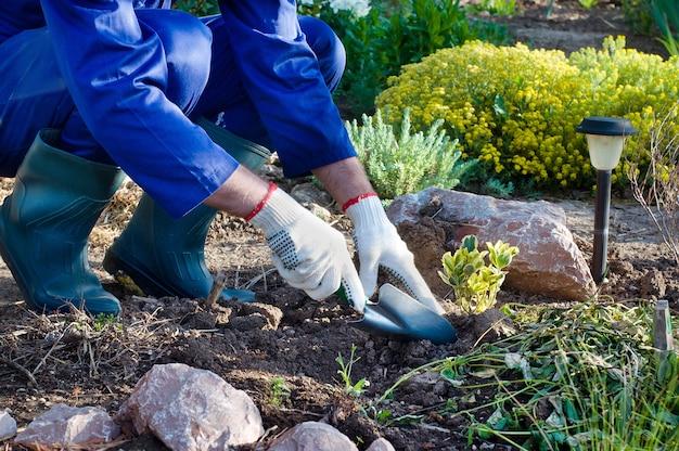 Close-up van de handen die van de boer een struik planten