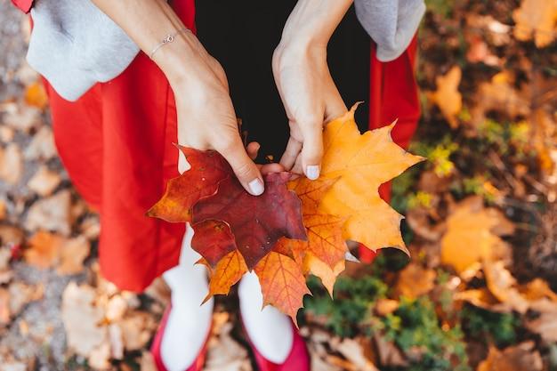 Close-up van de handen die van het meisje de bladeren van de de herfstesdoornboom houden