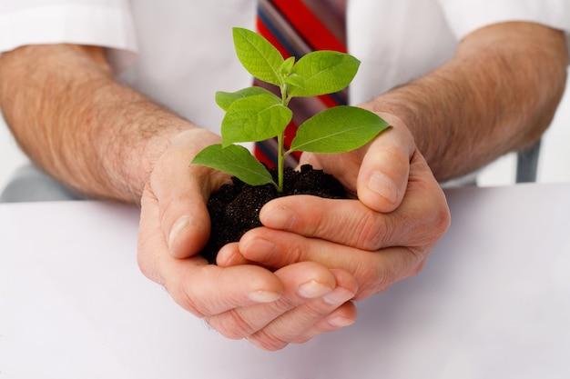 Close-up van de handen van een zakenman kop een groene plant.