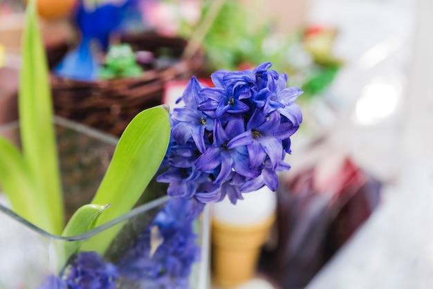 Close-up van de installatie van de hyacintbloem in het glas