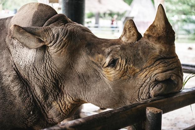 Close-up van de neushoorn in de dierentuin