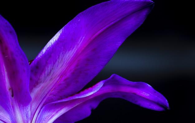 Close-up van de onderkant van een bloemblad van een lelie-stargazer