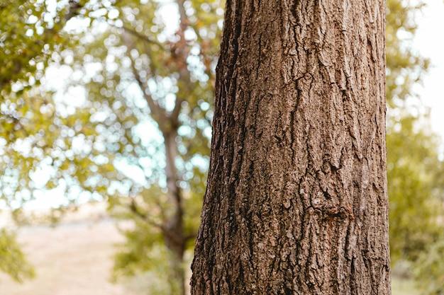 Close-up van de schors van een boom met blauwe erachter hemel