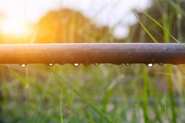 Close-up van de takken bedekt met regen in de tuin. de ochtendgloed