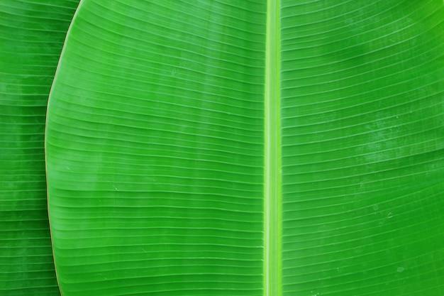 Close-up van de textuur abstracte achtergrond van het banaanblad