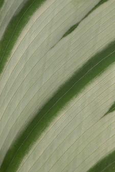 Close-up van de textuur van het installatieblad