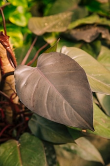 Close-up van donker bruin blad
