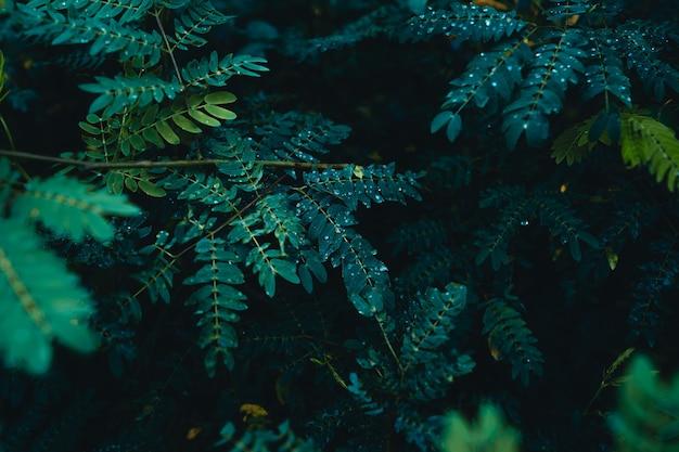 Close-up van donkergroene bladeren achtergrond