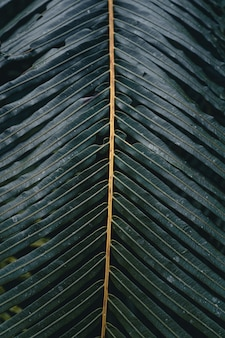 Close-up van donkergroene bladeren zwarte achtergrond