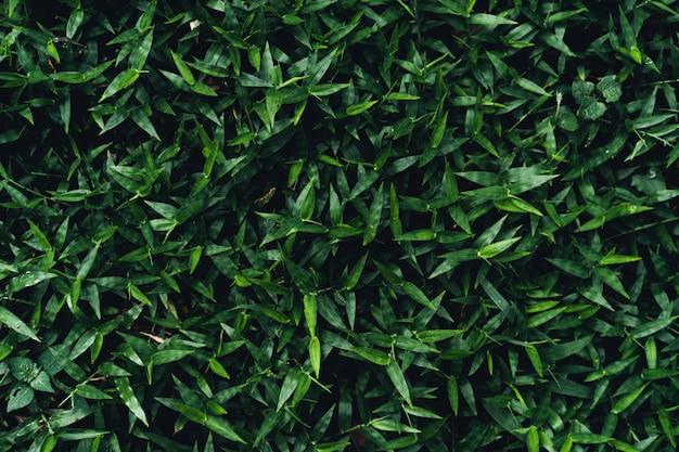 Close-up van donkergroene bladeren