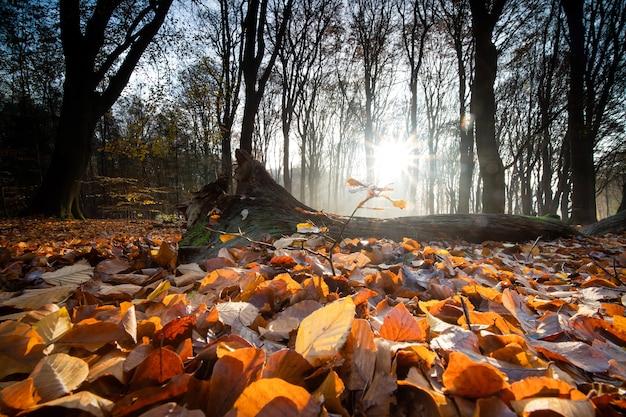 Close-up van droge bladeren die de grond bedekken, omringd door bomen in een bos in de herfst