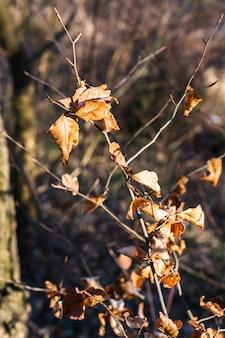 Close-up van droge bladeren op boomtakken onder het zonlicht