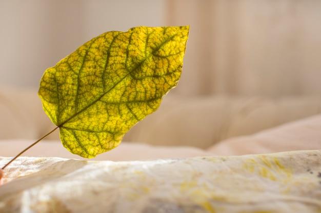 Close-up van droog blad met selectieve aandacht