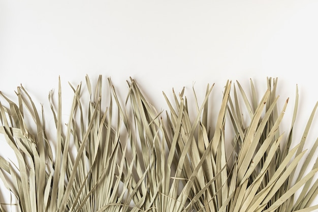 Close-up van droog tropisch palmblad geïsoleerd