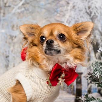 Close-up van een aangeklede chihuahua in een winterlandschap, wegkijken