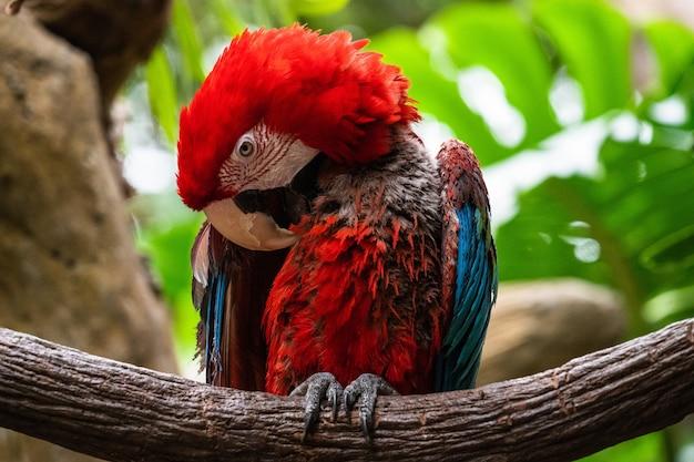 Close-up van een ara-papegaai die op een tak zit