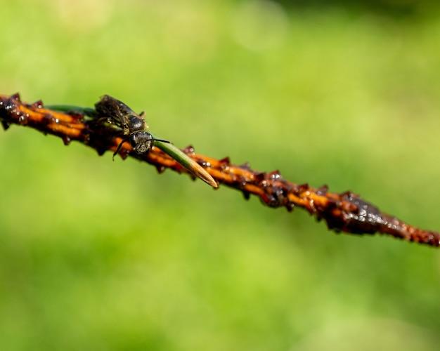 Close-up van een bij op de boomtak tegen de wazige groene achtergrond