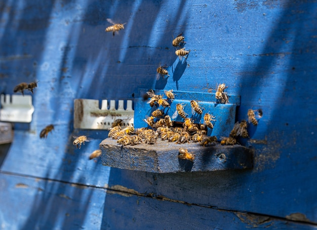 Close-up van een bijenzwerm op een houten bijenkorf in een bijenstal