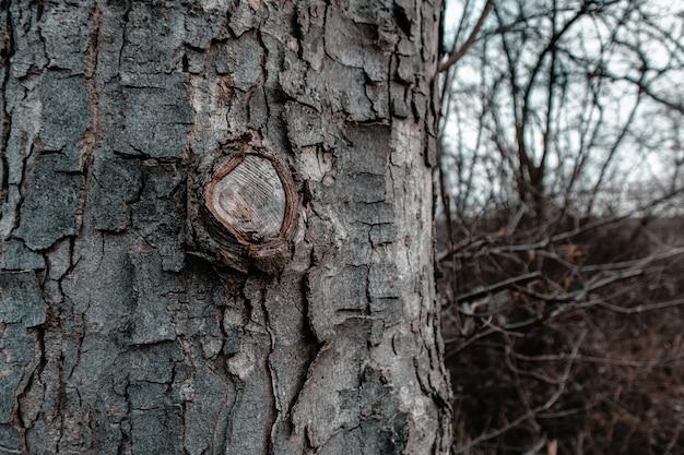 Close-up van een boomschors omgeven door takken