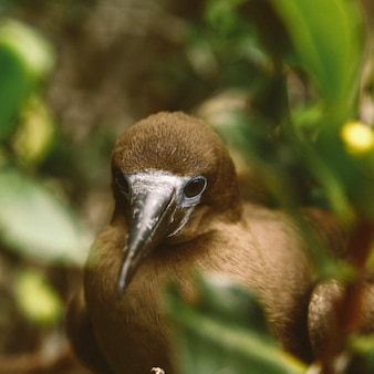 Close-up van een bruine vogel met een lange zwarte snavel met een onscherpe natuurlijke achtergrond
