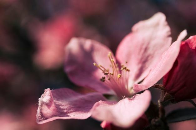Close-up van een enkele roze bloem