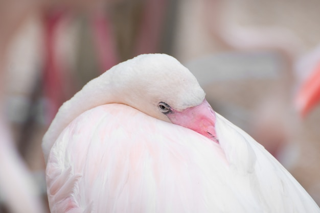 Close-up van een flamingo