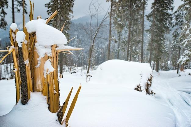 Close-up van een gebroken sparrenboom met gevaarlijke reepjes staat op een skihelling