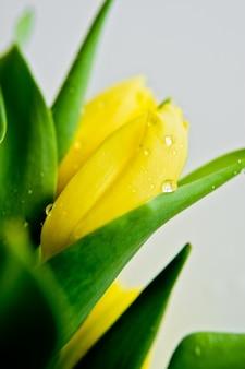 Close-up van een gele tulip bud met waterdruppels.