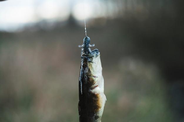 Close-up van een gevangen vis
