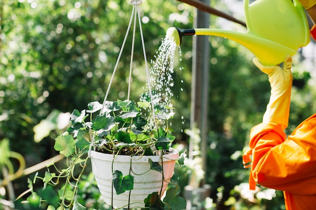 Close-up van een gieter water van de tuinmanhand bij het hangen van ingemaakte installatie
