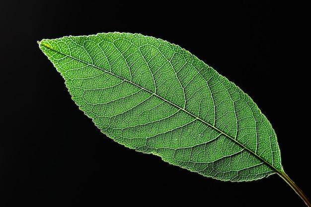 Close-up van een groen blad met een natuurlijk patroon van nerven op een zwarte achtergrond met kopie ruimte. top