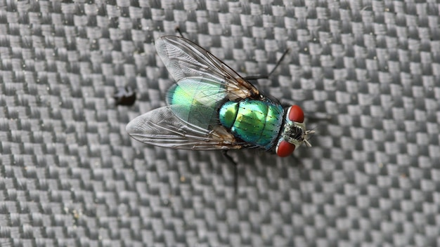 Close-up van een groene flesvlieg onder de lichten met een wazige achtergrond