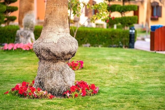 Close-up van een grote stam van een oude palmboom die groeit op een groen grasgazon met rode bloemen eromheen.