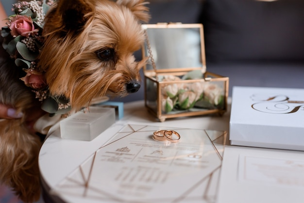 Close-up van een hond die naar trouwringen kijkt onder andere bruidsaccessoires