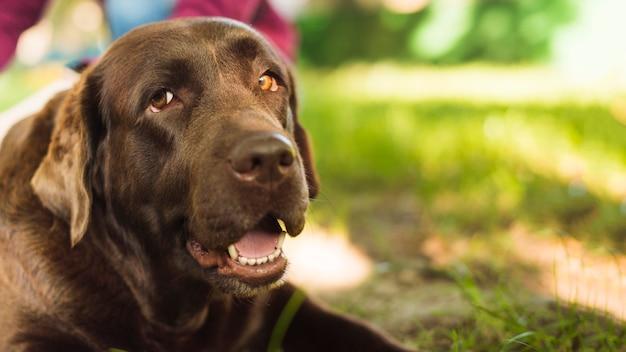 Close-up van een hond met open mond