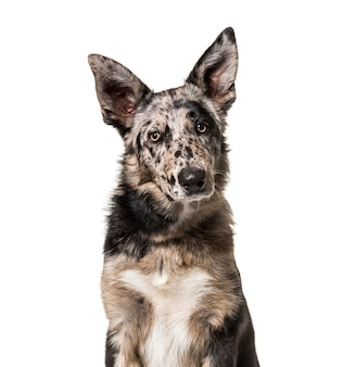 Close-up van een hond van gemengd ras voor een witte achtergrond