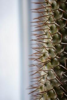 Close-up van een kamerplant die groeit in een pot bij het raam op de vensterbank