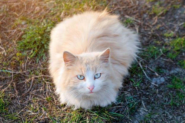 Close-up van een kat die de camera met vaag bekijkt. rustige kat buiten zitten in de zomer.