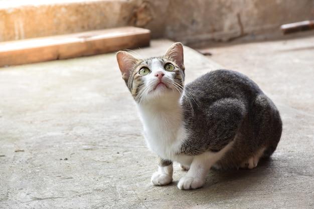 Close up van een kat die op de grond zit