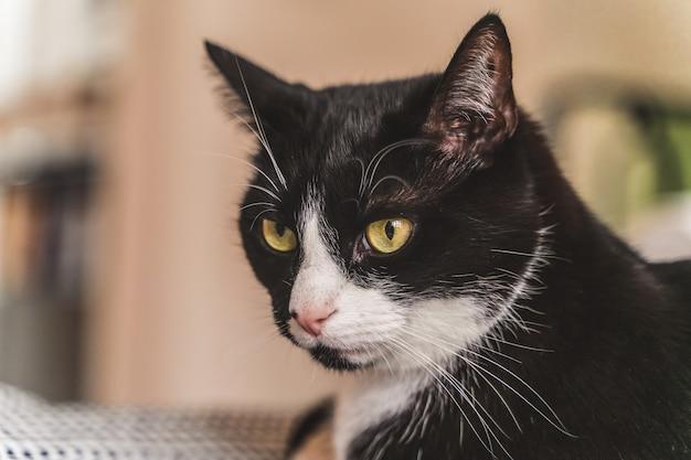 Close-up van een kat die op de stoel ligt