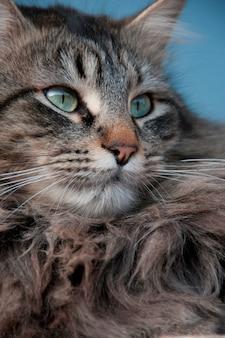 Close-up van een kat