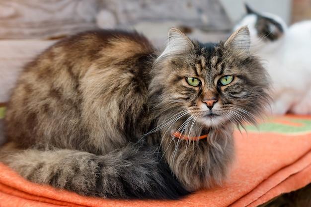 Close-up van een kattenzitting op bank met vage achtergrond. rustige kat buiten zitten in de zomer.
