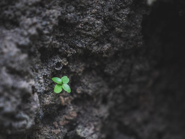 Close-up van een kleine groene boom bij de grondkuil