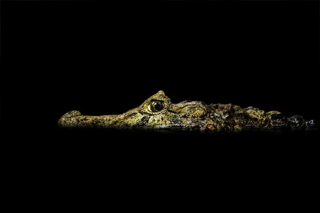 Close-up van een krokodil die rond op zwart water kijkt