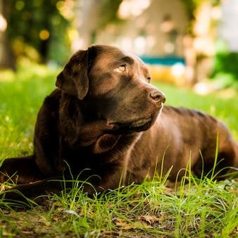 Close-up van een leuke hond die op gras ligt