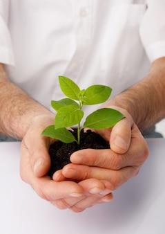 Close-up van een mensenhanden cup een groene plant.