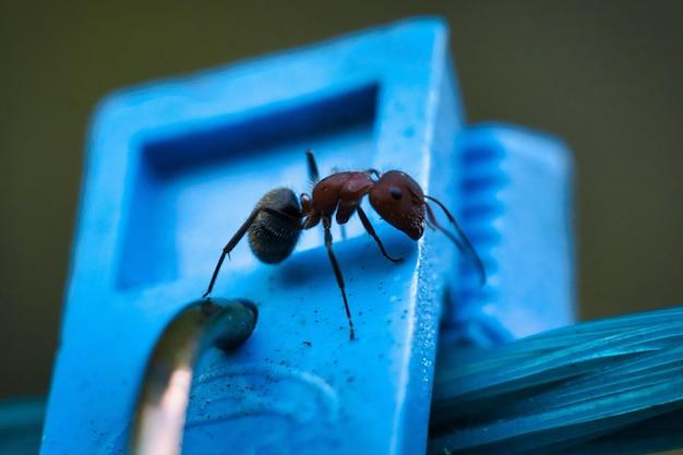Close-up van een mier op een blauw gekleurd oppervlak