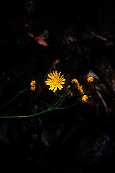 Close-up van een mooie gele bloem in een forest