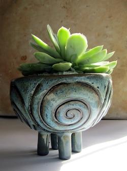 Close-up van een mooie keramische pot met een vrij kleine groene plant